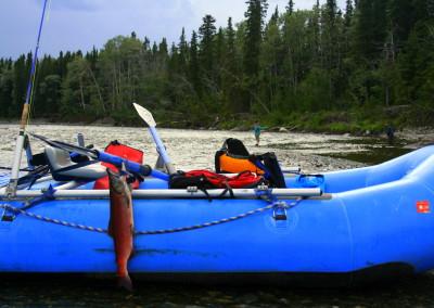 Sockeye Salmon, Gulkana River, Alaska fishing, salmon fishing